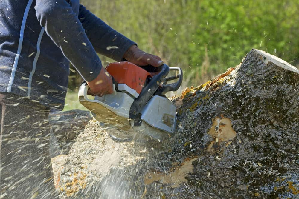 Traditional Tree Service & Tree Removal