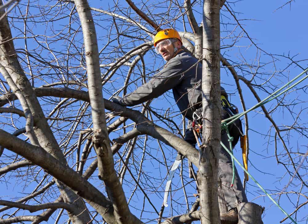 Tree Trimming on Long Island