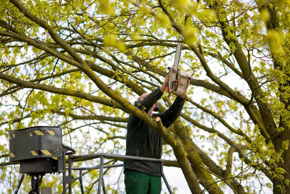 Long Island Tree Trimming