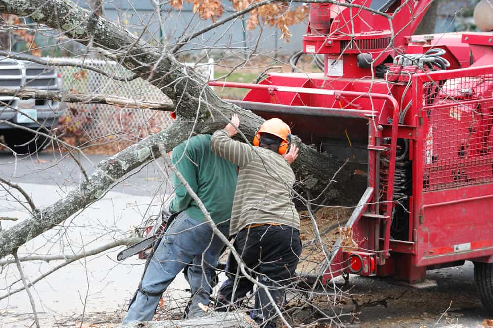 Tree Removal on Long Island