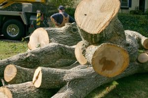 Green Light Tree Services & Tree Removal